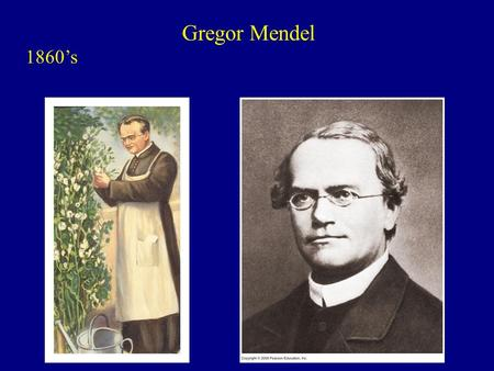 Gregor Mendel 1860's. Garden Pea Flower produces both gametes. stamens: male carpel: female.