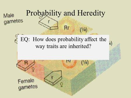 Probability and Heredity EQ: How does probability affect the way traits are inherited?