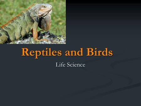 reptile and bird eggs an introduction 07122017 here's a guide to the favorite meals of the major reptile groups  reptiles are a diverse  frogs, lizards, and bird eggs (as well as bird.