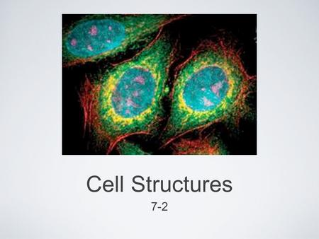 Cell Structures 7-2. Cell Structures The cell has many parts that work together like a machine in order to carry out all of it's life processes They all.