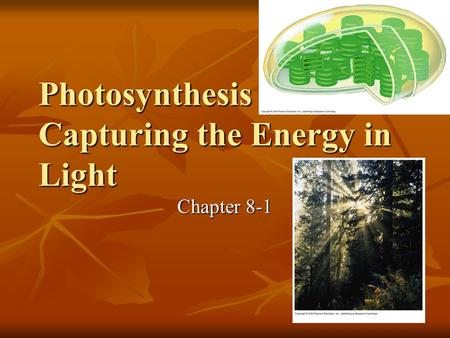 Photosynthesis – Capturing the Energy in Light Chapter 8-1.