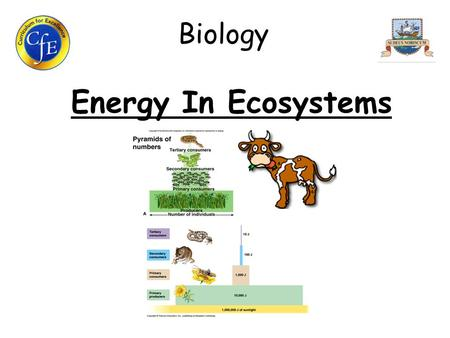 Biology Energy In Ecosystems. 1. Roles of Organisms in Food Chains/Webs A food chain is a relationship where one organism feeds on the previous one in.