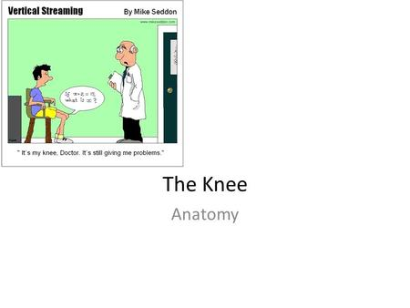 The Knee Anatomy. The Bones The knee is comprised of 3 bones – Femur – Patella – Tibia The Fibula has no bearing on the knee.