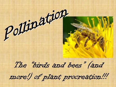 "The ""birds and bees"" (and more!) of plant procreation!!! Pollination."