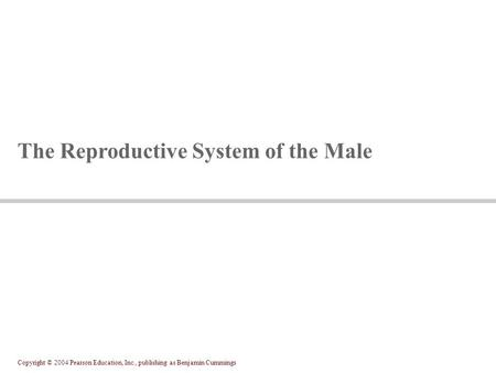 Copyright © 2004 Pearson Education, Inc., publishing as Benjamin Cummings The Reproductive System of the Male.