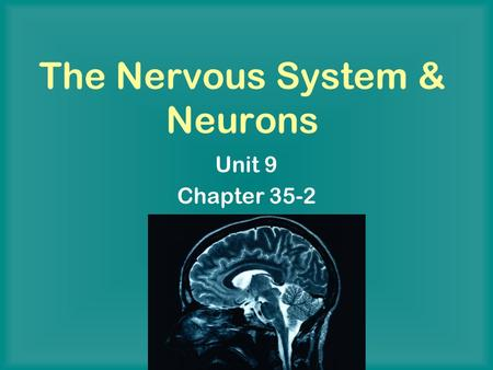 The Nervous System & Neurons Unit 9 Chapter 35-2.
