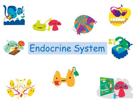 Endocrine System. What Is the Endocrine System? The endocrine system is a system in your body that is in charge of body processes that happen slowly.