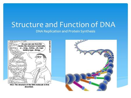 Structure and Function of DNA DNA Replication and Protein Synthesis.