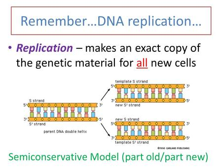 Remember…DNA replication… Replication – makes an exact copy of the genetic material for all new cells Semiconservative Model (part old/part new)