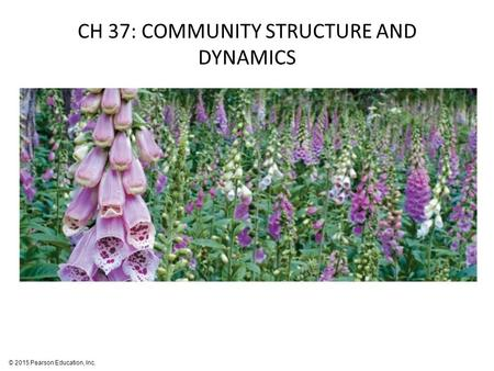 © 2015 Pearson Education, Inc. CH 37: COMMUNITY STRUCTURE AND DYNAMICS.