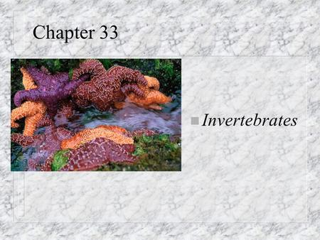 Chapter 33 n Invertebrates. Parazoa n Invertebrates: animals without backbones n Closest lineage to protists n Loose federation of cells (unspecialized);