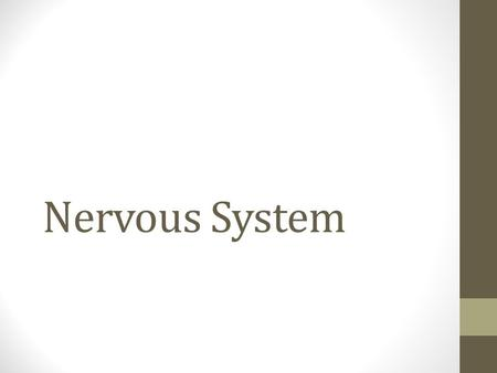 Nervous System. Functions of the Nervous System Monitor internal and external environments Integrate sensory information Coordinate voluntary and involuntary.