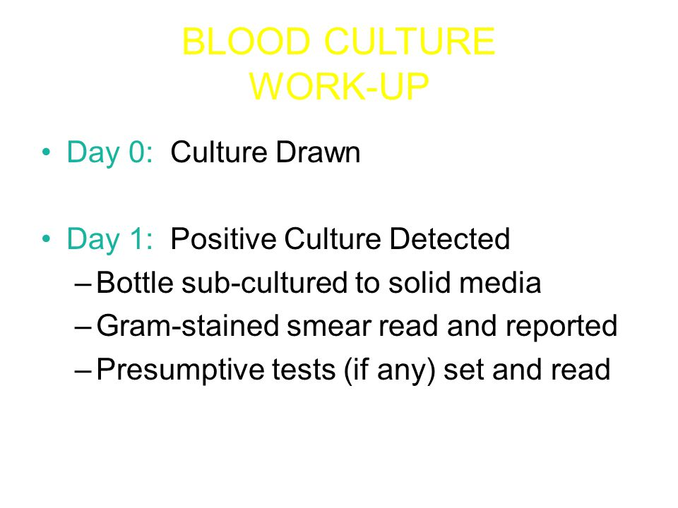 BLOOD CULTURE WORK-UP Day 2: Growth on solid media –Identification and Susceptibility tests set –Identification usually complete –Susceptibility test may be complete Day 3: Susceptibility test usually complete