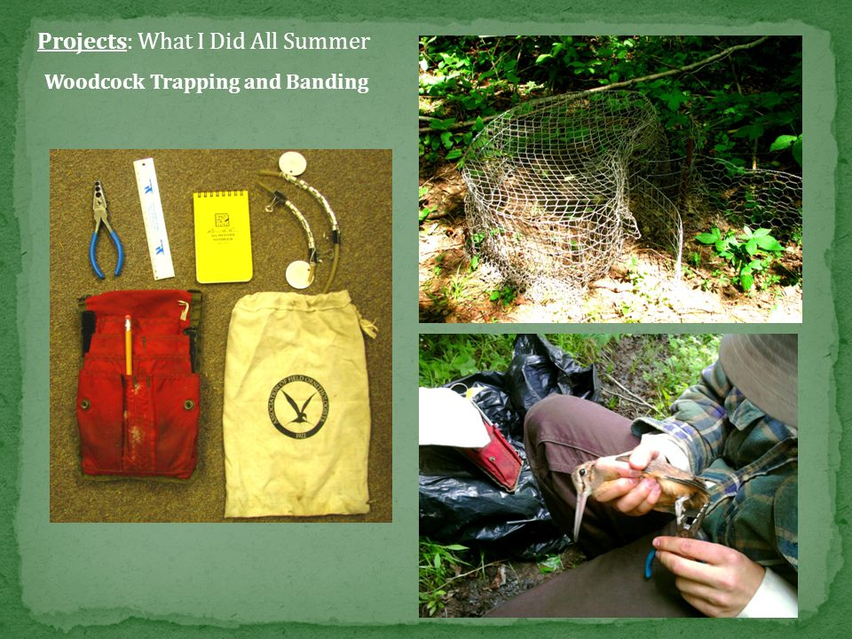 Projects: What I Did All Summer Brood and Wildlife Surveys