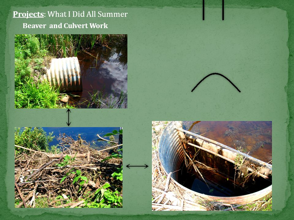 Projects: What I Did All Summer Invasive Work