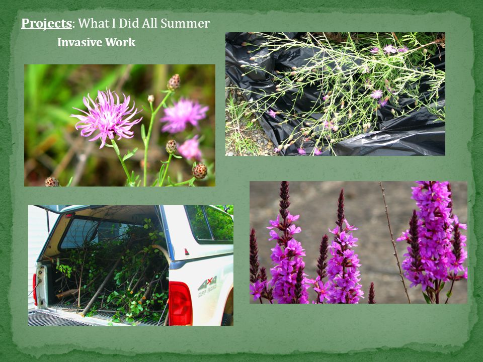Projects: What I Did All Summer Butterfly Survey