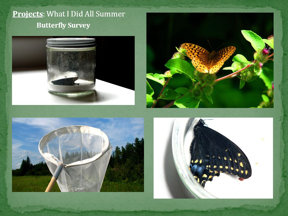 Projects: What I Did All Summer