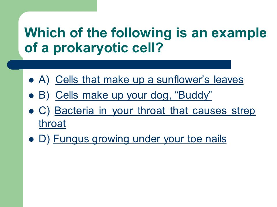 Which of the following is an example of a prokaryotic cell.