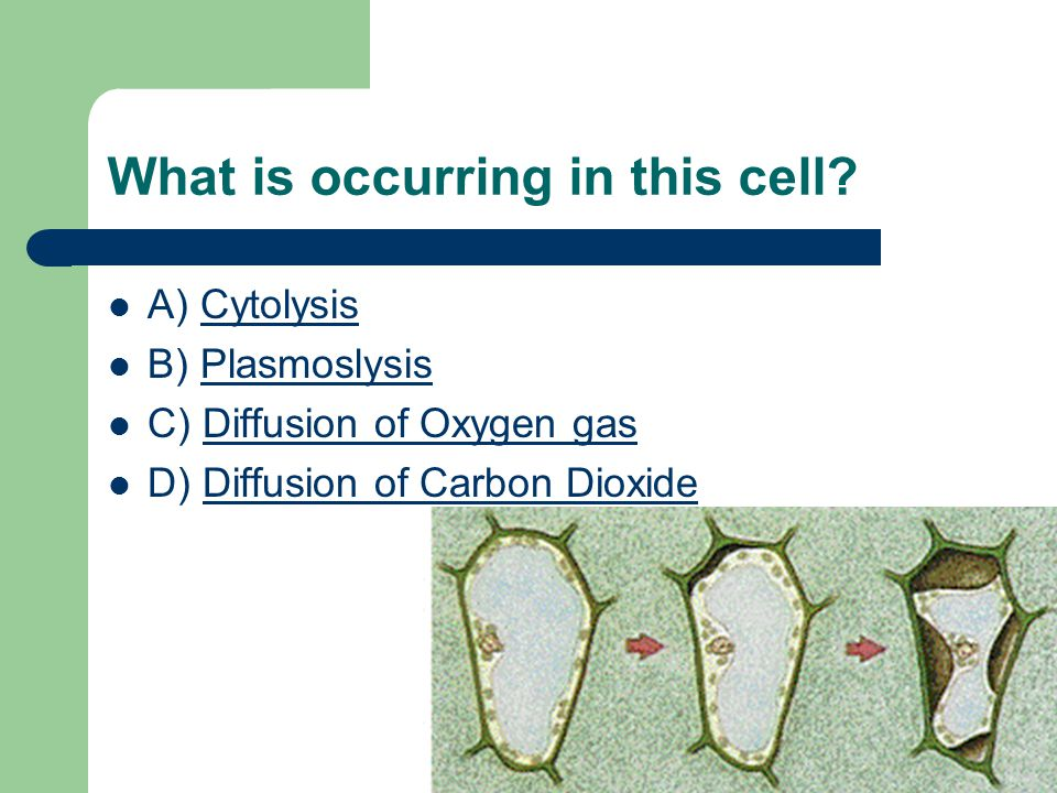 What is occurring in this cell.