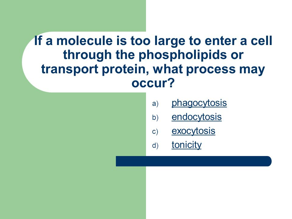 If a molecule is too large to enter a cell through the phospholipids or transport protein, what process may occur.