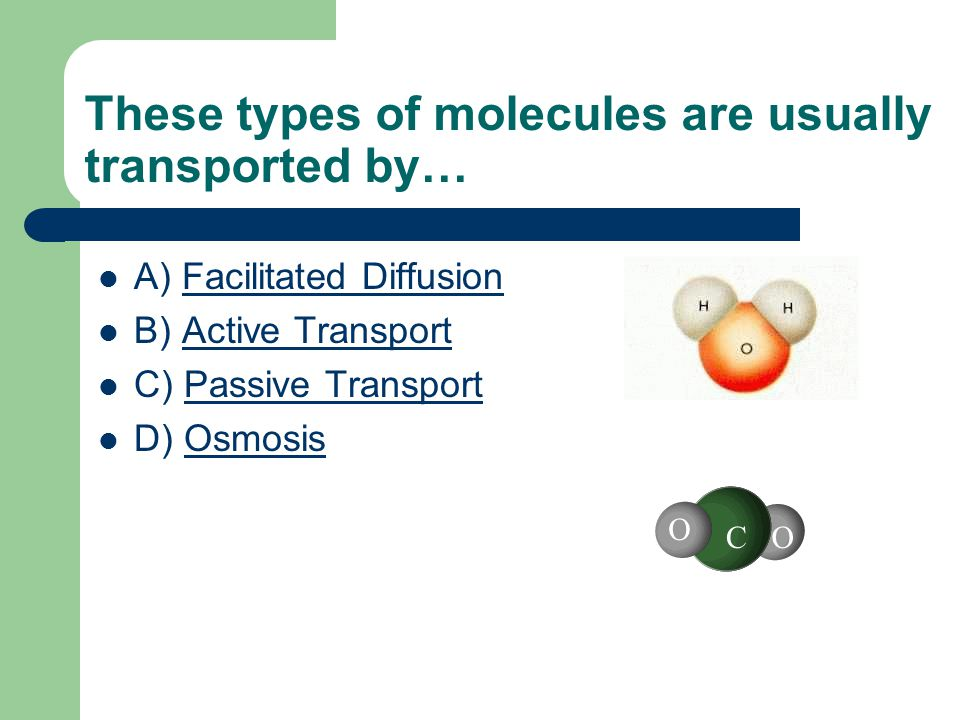 These types of molecules are usually transported by… A) Facilitated DiffusionFacilitated Diffusion B) Active TransportActive Transport C) Passive TransportPassive Transport D) OsmosisOsmosis O OC