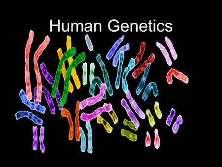 Human Genetics. Human Heredity Studying human genetics.