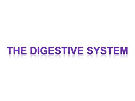 The Digestive System Digestive system: the organ system that is made up of the mouth, esophagus, stomach, intestines, liver, pancreas, and gall bladder;