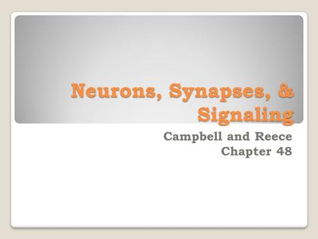 Neurons, Synapses, & Signaling Campbell and Reece Chapter 48.