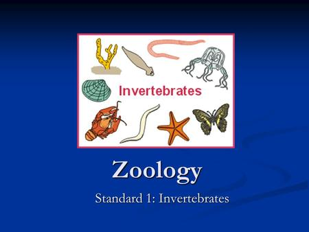 Zoology Standard 1: Invertebrates. Warm-up List 5 characteristics of members of the Kingdom Animalia. List 5 characteristics of members of the Kingdom.