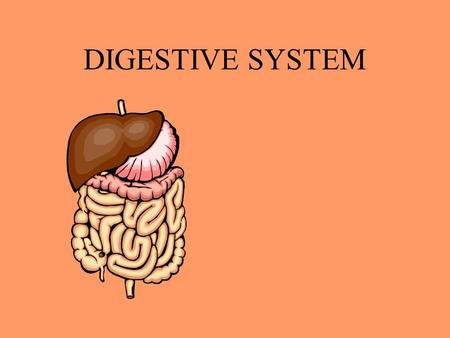 DIGESTIVE SYSTEM DIGESTION THE BREAK DOWN OF FOOD INTO NUTRIENTS.