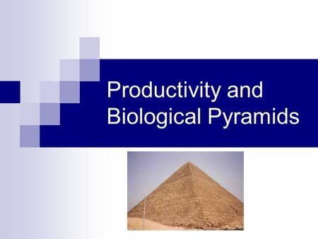 Productivity and Biological Pyramids. Biological Pyramids Biological pyramids are graphical models of the quantitative differences that exist between.
