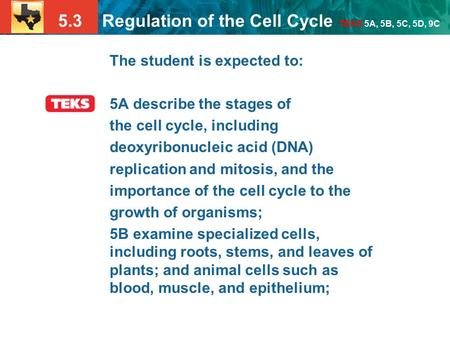 5.3 Regulation of the Cell Cycle TEKS 5A, 5B, 5C, 5D, 9C The student is expected to: 5A describe the stages of the cell cycle, including deoxyribonucleic.