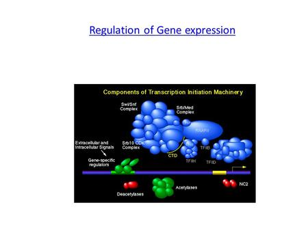 Regulation of Gene expression. Learning Goals: To know and explain:  Constitutive ( house keeping) vs. Controllable genes  OPERON structure and its.