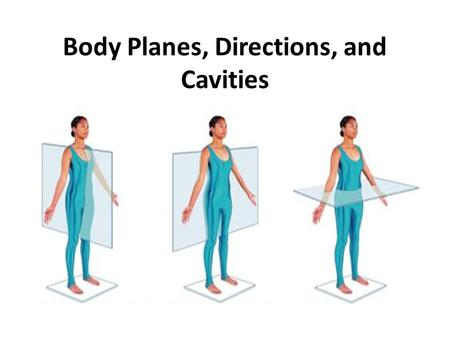 Body Planes, Directions, and Cavities. Body Planes Imaginary lines drawn through the body to separate the body into sections.