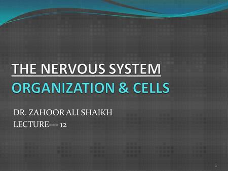 DR. ZAHOOR ALI SHAIKH LECTURE--- 12 1. First We Will Discuss 'ORGANIZATION & CELLS OF NERVOUS SYSTEM' then we will talk about 'Overview of Central nervous.