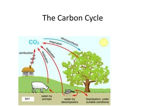 The Carbon Cycle. Carbon Carbon (C) is a nutrient that is essential to all living things. Carbon moves through an ecosystem in a cycle called THE CARBON.