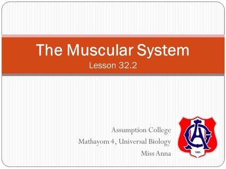 Assumption College Mathayom 4, Universal Biology Miss Anna The Muscular System Lesson 32.2.