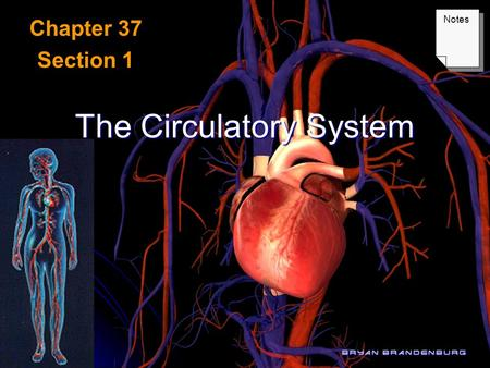 The Circulatory System Chapter 37 Section 1 Notes.