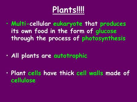 Plants!!!! Multi-cellular eukaryote that produces its own food in the form of glucose through the process of photosynthesis All plants are autotrophic.
