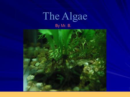 The Algae By Mr. B.. What are Algae? Eukaryotic plants (autotrophs) Can be –Unicellular –Multicellular as filaments, or multicellular leaflike Found at.
