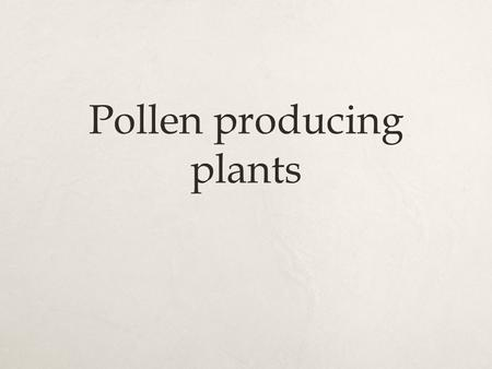 "Pollen producing plants. Gymnosperms  Have long thin needle like leaves – to conserve water.  Largest group are the conifers – ""Christmas"" trees  Are."