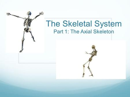 The Skeletal System Part 1: The Axial Skeleton. Warm-up Read the handout from bench 8 The History of the Skeleton and record 5 things you learned from.