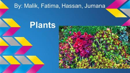 Plants By: Malik, Fatima, Hassan, Jumana. Like all living things, plants grow and change. A plant is something that begins as a seed and makes its own.