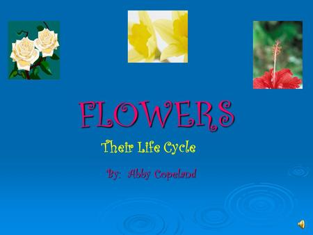 FLOWERS By: Abby Copeland Their Life Cycle Life Cycle of a FLOWER One of nature's seeming miracles is life that develops in the cool darkness of the.