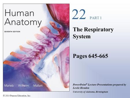 © 2014 Pearson Education, Inc. PowerPoint ® Lecture Presentations prepared by Leslie Hendon University of Alabama, Birmingham 22 PART 1 The Respiratory.