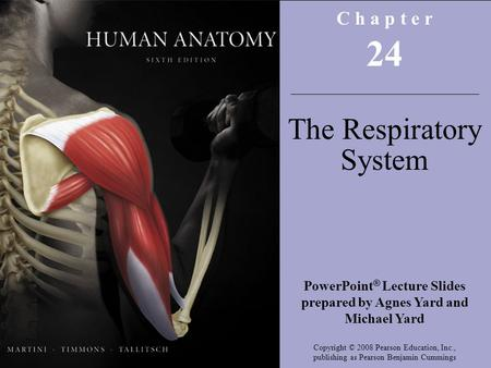 Copyright © 2008 Pearson Education, Inc., publishing as Benjamin Cummings C h a p t e r 24 The Respiratory System PowerPoint ® Lecture Slides prepared.