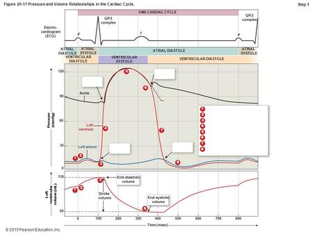 © 2015 Pearson Education, Inc. Figure 20-17 Pressure and Volume Relationships in the Cardiac Cycle. Aorta Electro- cardiogram (ECG) QRS complex P T ONE.