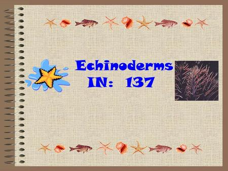 "Echinoderms IN: 137. I. General Characteristics 1.Phylum Echinodermata- ""spiny skinned"" 2.Have bumpy exoskeletons covered with spiny skin (made from calcium."