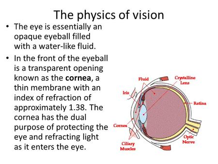 The physics of vision The eye is essentially an opaque eyeball filled with a water-like fluid. In the front of the eyeball is a transparent opening known.