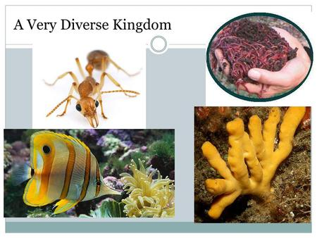 A Very Diverse Kingdom. Kingdom Animalia Characteristics All animals share the following characteristics 1. Eukaryotic 2. Multicellular 3. Reproduce sexually.